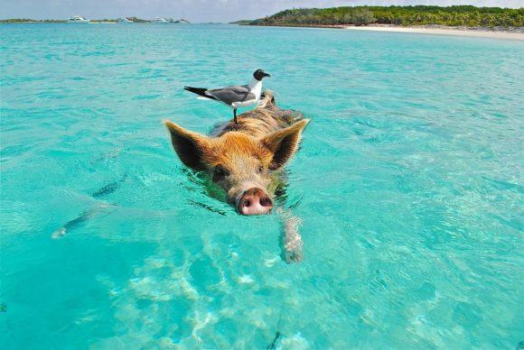 flygresor-bahamas-reseguide